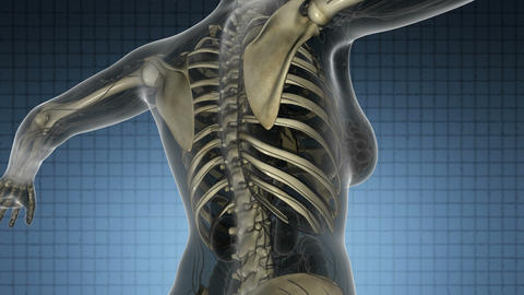 science anatomy scan of human body with skeletal bones on blue Animation