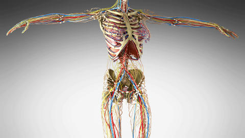 science footage of full body anatomy Stock Video Footage
