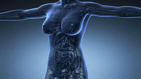 science anatomy of human body in x-ray with all organs on blue background Animation