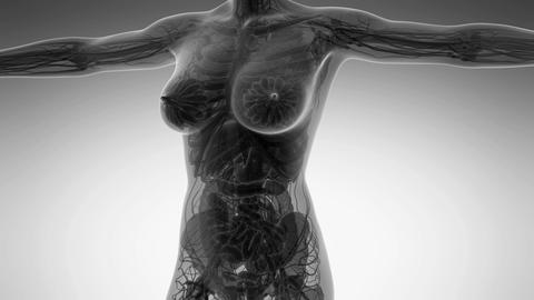 science anatomy of human body in x-ray with all organs Animation