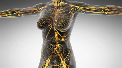science anatomy of human body in x-ray with glow blood vessels Animation