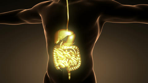 science anatomy of man body with glow digestive system Animation