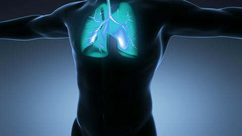 science anatomy of man body with glow lungs on blue Animation