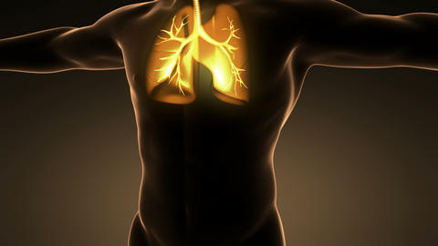 science anatomy of man body with glow lungs Animation