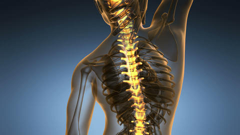 science anatomy scan of human spinal bones glowing with yellow 49 Animation