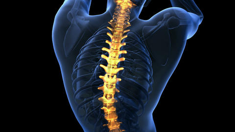 backbone. backache. science anatomy scan of human spine bones glowing with yello Animation
