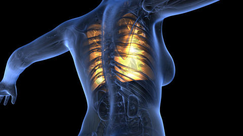 loop science anatomy of human body in x-ray with glow lungs on blue. alpha ch Animation