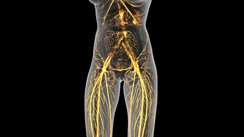 science anatomy of human body in x-ray with glow blood vessels on white Animation