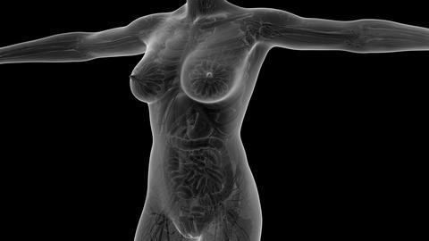science anatomy of human body in x-ray with glow blood... Stock Video Footage