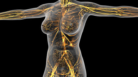 science anatomy of human body in x-ray with glow blood vessels. alpha channel Animation