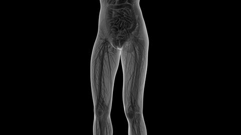 science anatomy of human body in x-ray with all organs in... Stock Video Footage