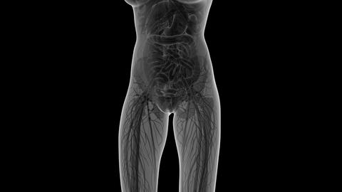 science anatomy of human body in x-ray with all organs in white. alpha Animation