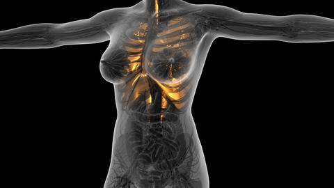 science anatomy of human body in x-ray with glow lungs. alpha channel Animation