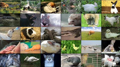 Several animal themed videos, collage Live Action