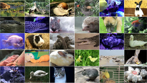 Variety of animal images as a large wall of images, a documentary channel on nature Live Action