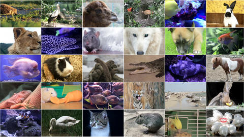 Animated video walls with many animals Live Action
