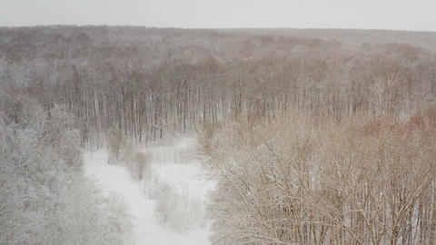 Snowy forest, view from above. Top down aerial drone view in a snowy winter Live影片