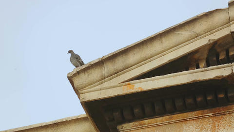 Pigeon sitting on top of ancient marble construction decorated with moulding Footage