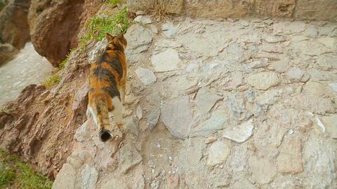 Cat walking ruins gracefully, sacred animal, symbol of femininity and freedom Live Action