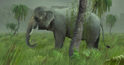Asian Elephant in Jungle CG動画