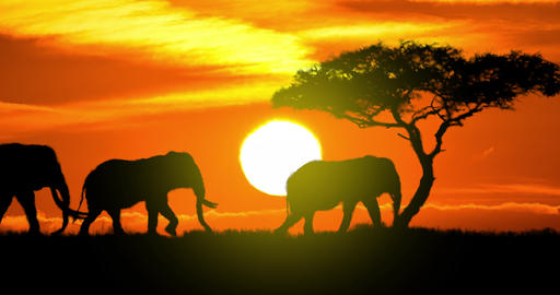 Elephants Silhouette at Sunset Animation