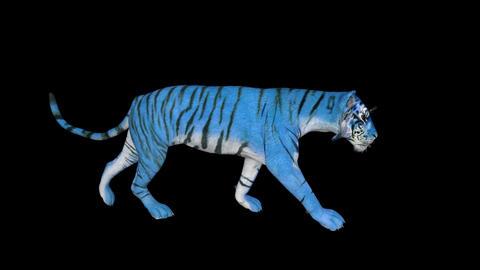 3D model blue Water Tiger walks, animation transparent background Live Action