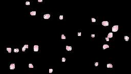 Sakura Flutter Side 02 Loop CG動画