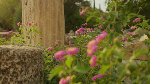 Weeds and flowers growing on ruins of abandoned building, decaying construction Live Action