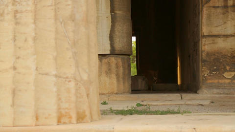 View inside remains of ancient temple, old marble columns, decaying stone walls Live Action