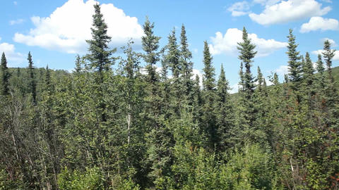 Alaska forest from train P HD 7912 Live Action