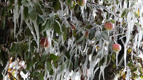 Apples frozen P HD 3632 Footage
