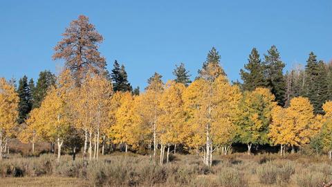 Autumn trees pan P HD 3493 Footage