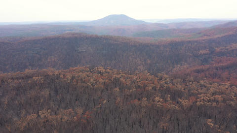 Drone aerial footage of a large area of Eucalyptus trees burnt by bushfire in The Blue Mountains Live Action
