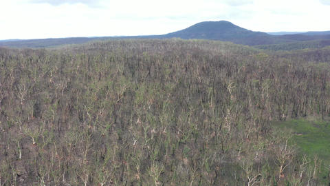 Aerial footage of forest regeneration after the Blue Mountains bush fires in Australia Acción en vivo