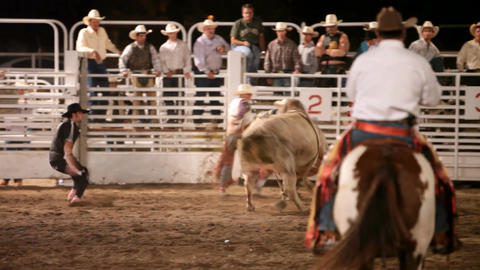 Bull riding chute 1 P HD 1014 Footage