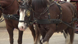 Colonial Williamsburg Virginia historic horse carriage close 4K 029 Footage