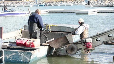 Commercial carp fisherman unloading fish HD 0793 Footage
