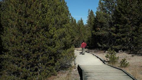 Couple on boardwalk in forest P HD 2525 Footage