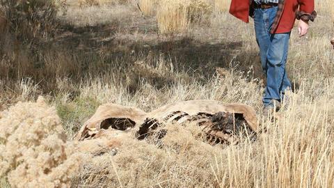 Dead animal man and dog P HD 8051 Footage