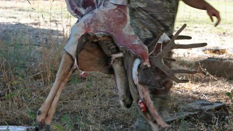 Deer pulling hide off P HD 2147 Live Action