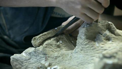 Dinosaur fossil bone removal P HD 7242 Footage
