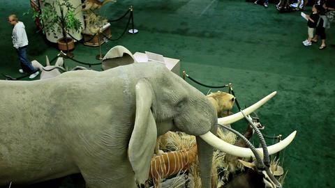 Elephant wildlife museum P HD 7275 Footage