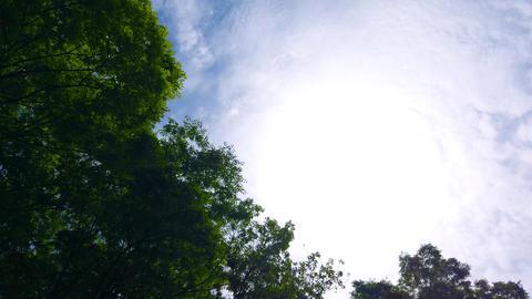 Backlit tree Live Action
