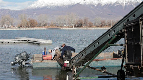 Fishery Utah lake early winter loading fish for transport HD 0812 Footage