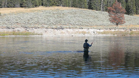 Fly fishing Yellowstone River P HD 2674 Footage