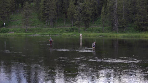 Fly fishing river in Yellowstone National Park 4K Footage