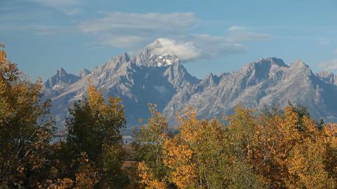 Grand Teton autumn trees P HD 3120 Live Action