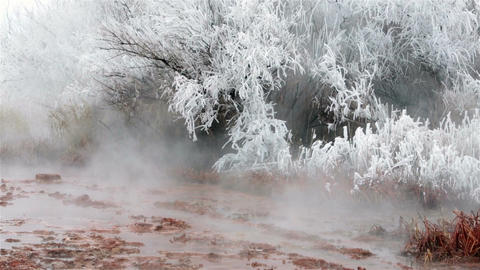 Hot natural springs hoar ice frost on trees HD 5074 Footage