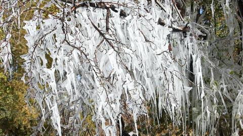 Ice storm on fruit trees P HD 8032 Footage