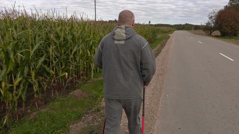 Hiker with walking sticks walking away near corn field Live Action